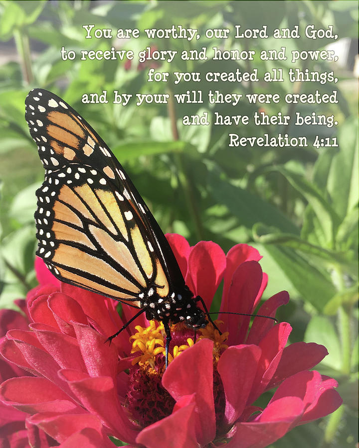 Butterfly Photograph - Creation Speaks by April Beaver