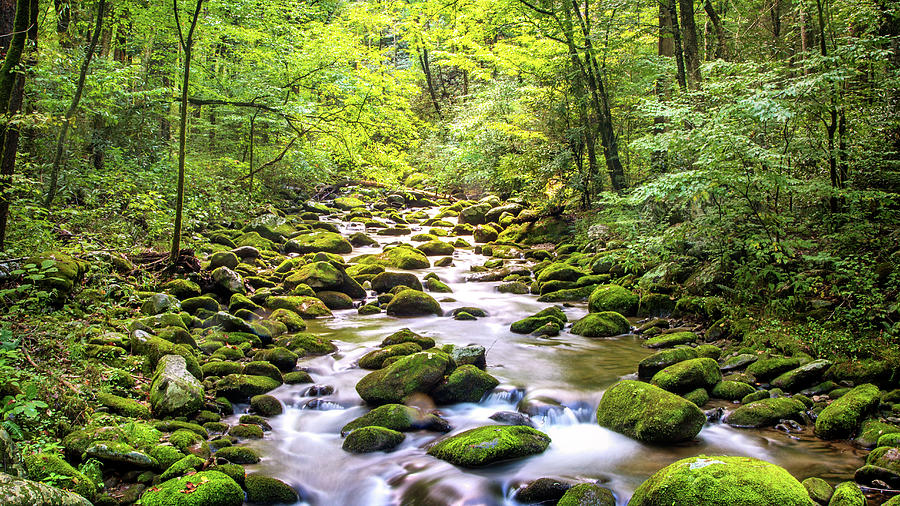 Trees Photograph - Creek Running Through Roaring Fork In Smoky Mountains by Susan Schmitz