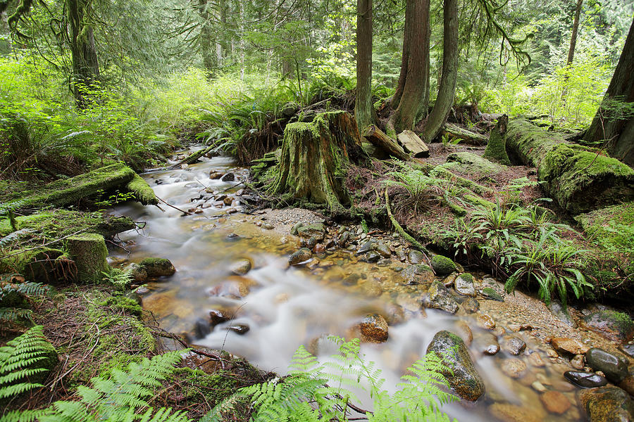 Creek Photograph by Temmuzcan