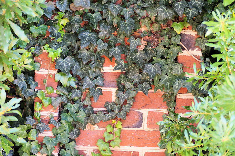 Creeping Ivy by Jeri Love