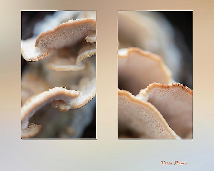Creme Shelf Fungus by Karen Rispin