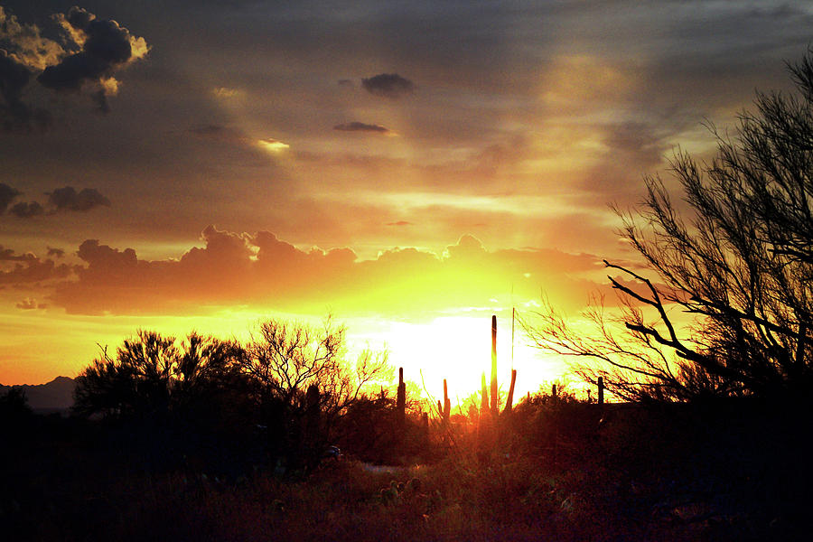 Crepuscular Sunset Rays above Tucson, Arizona and Saguaro by Chance Kafka