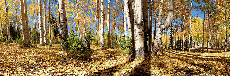 Crested Butte Colorado Fall Colors Panorama - #2 by OLena Art - Lena Owens