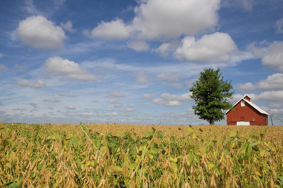 Crisp Air Bean Farm by Dylan Punke