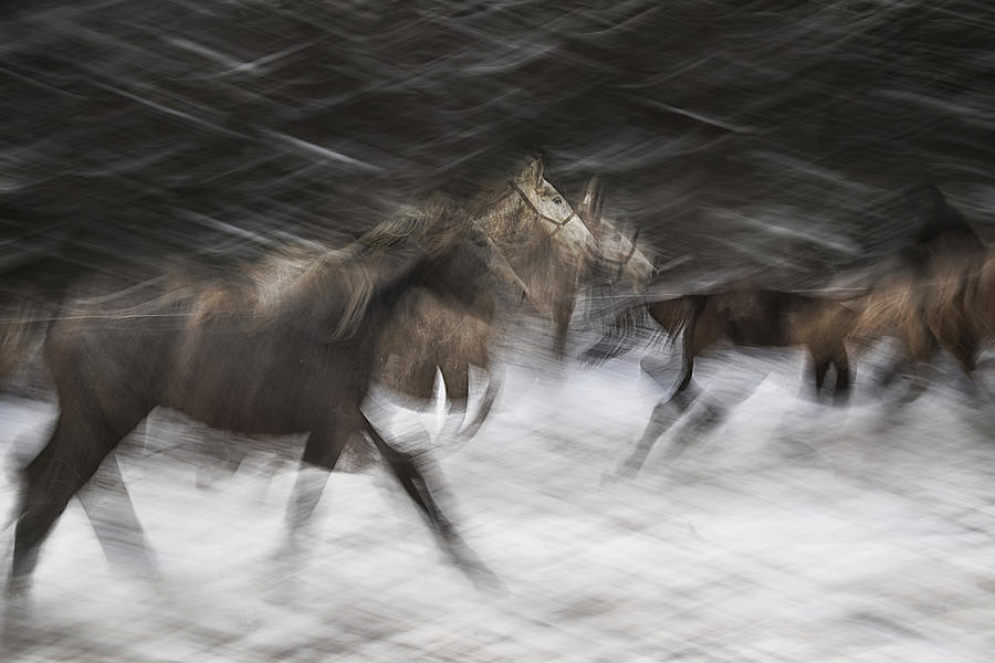 Action Photograph - Croos by Milan Malovrh