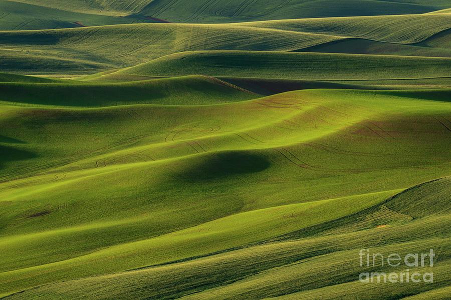 Crop Circles by Mike Dawson
