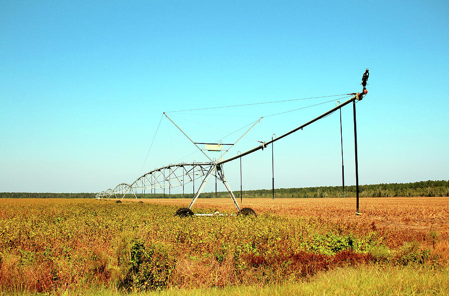 Crop Irrigation by Cynthia Guinn