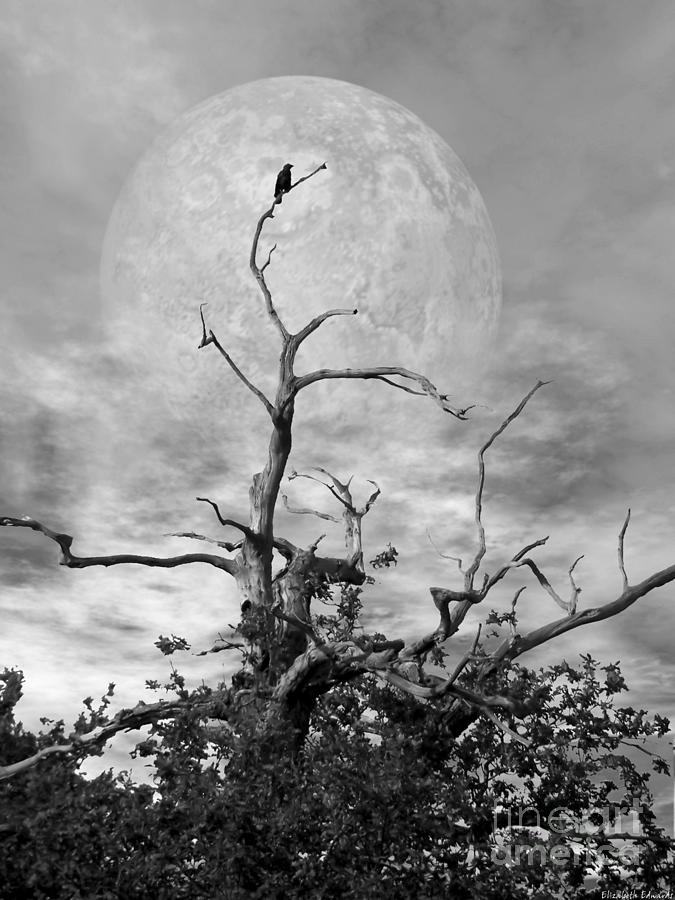 Crow Tree Black and White Look 4 of 4 by Abbie Shores