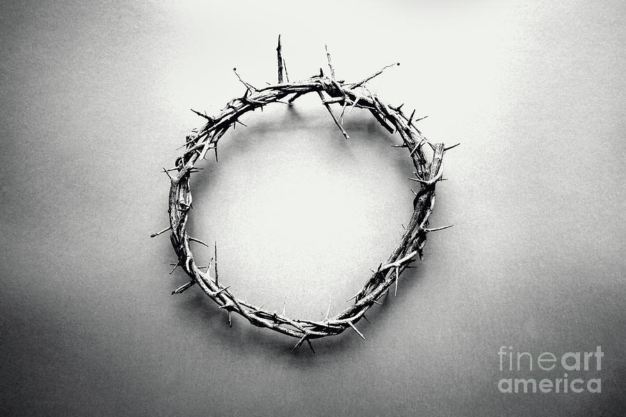 Crown of Thorns in Black and White  by Stephanie Frey