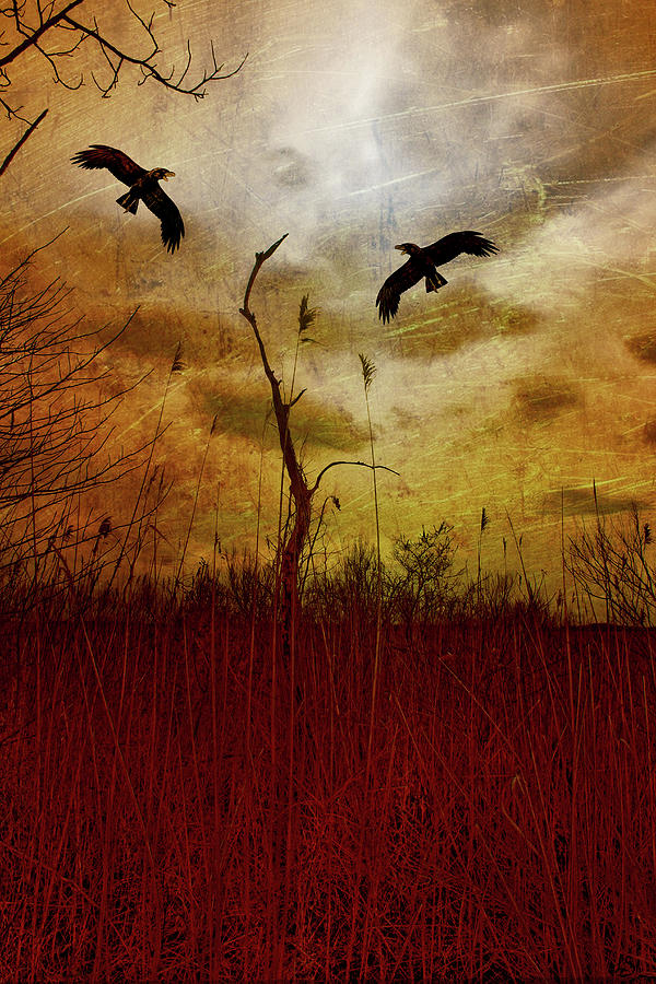 Crows In The Sunset by Linda Sannuti