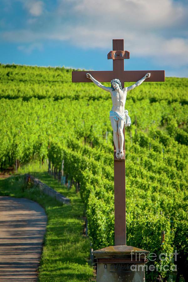 Crucifix in Vineyards of the Grand Cru by Brian Jannsen