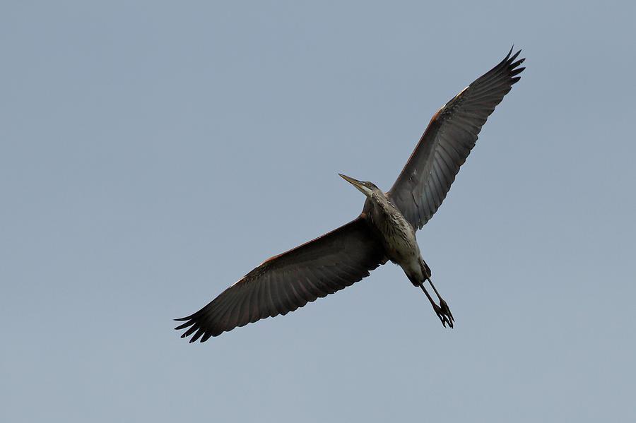 Graceful Flight by Shoeless Wonder