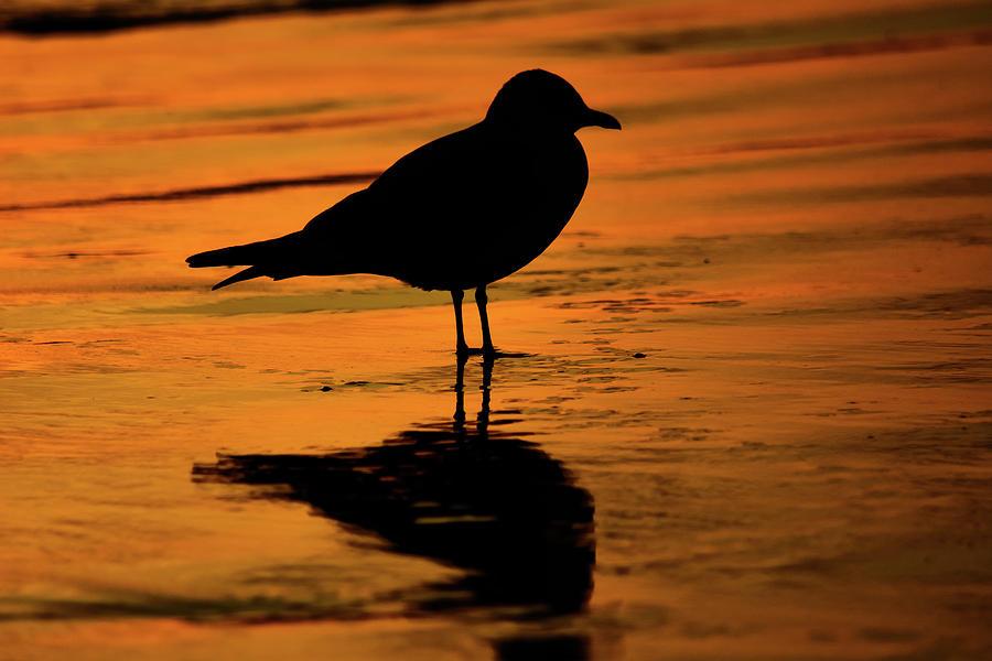 Crystal Cove Bird by Kyle Hanson