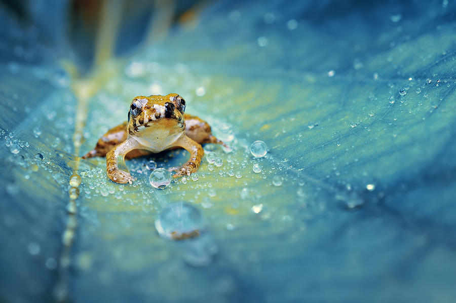 Frog Photograph - Crystal Guard by Robby Fakhriannur