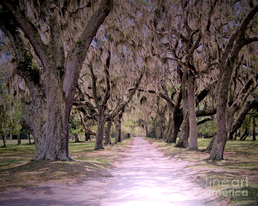 Cumberland Fairytale Lane by Kristen Abrahamson