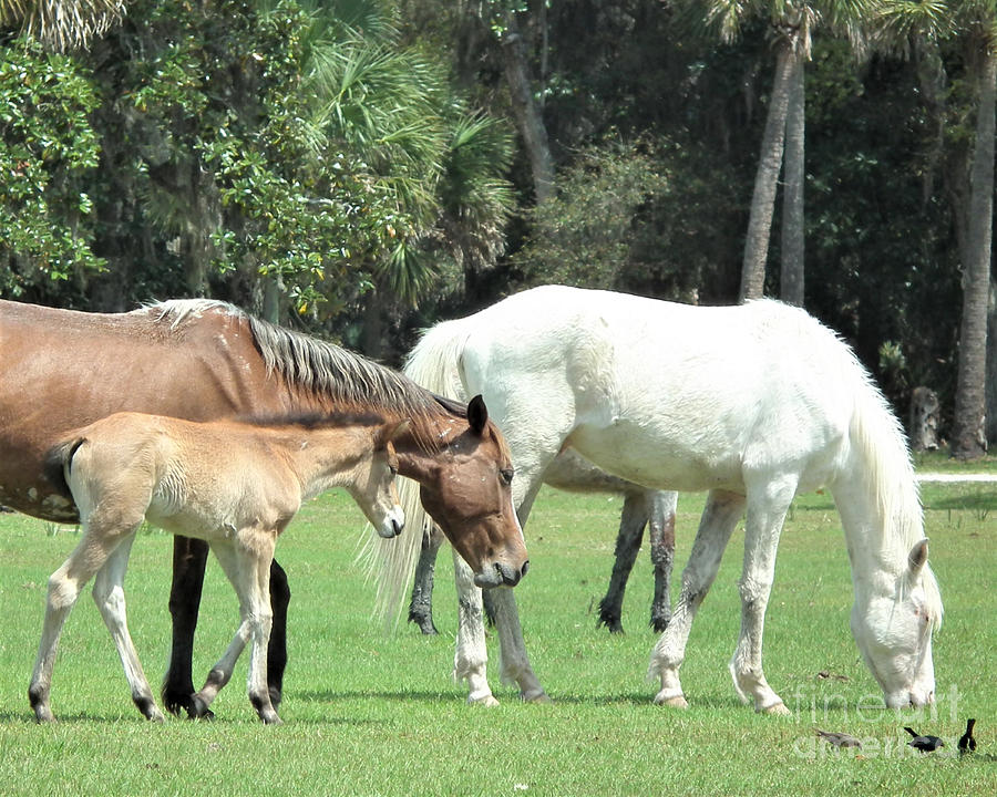 Cumberland Horses Family Portrait by Kristen Abrahamson