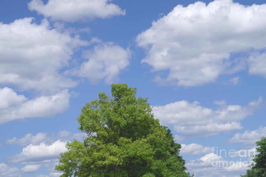 Cumulus Clouds Photograph