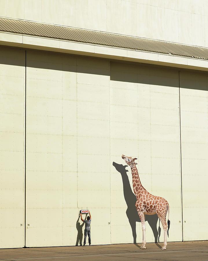 Curious Giraffe Photograph by Richard Newstead