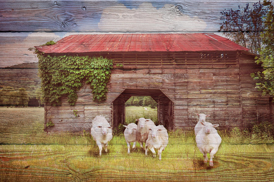 Animals Photograph - Curious In Wood Textures by Debra and Dave Vanderlaan