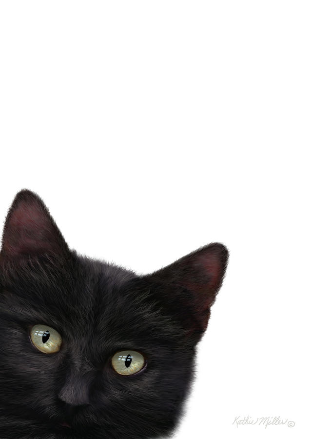 Curious Kitty by Kathie Miller