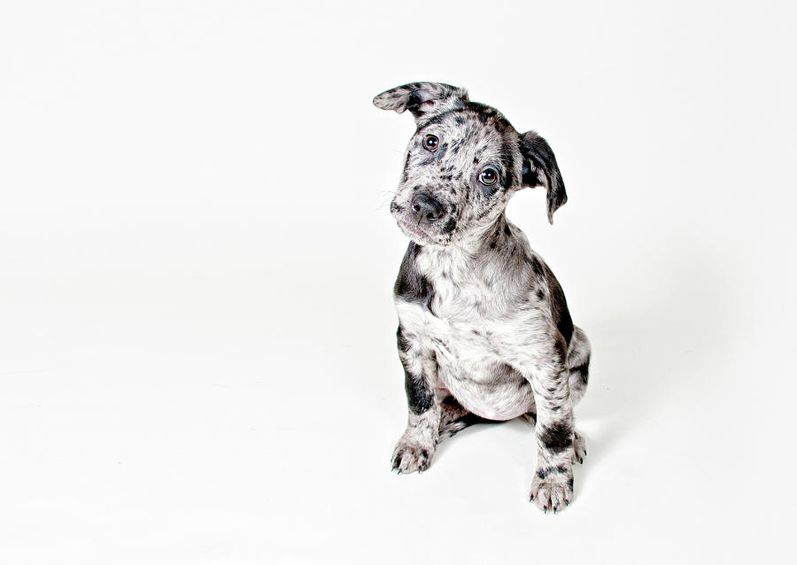 Pets Photograph - Curious Puppy by Chad Latta