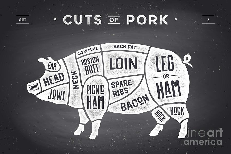 Butchery Digital Art - Cut Of Meat Set. Poster Butcher by Forest Foxy