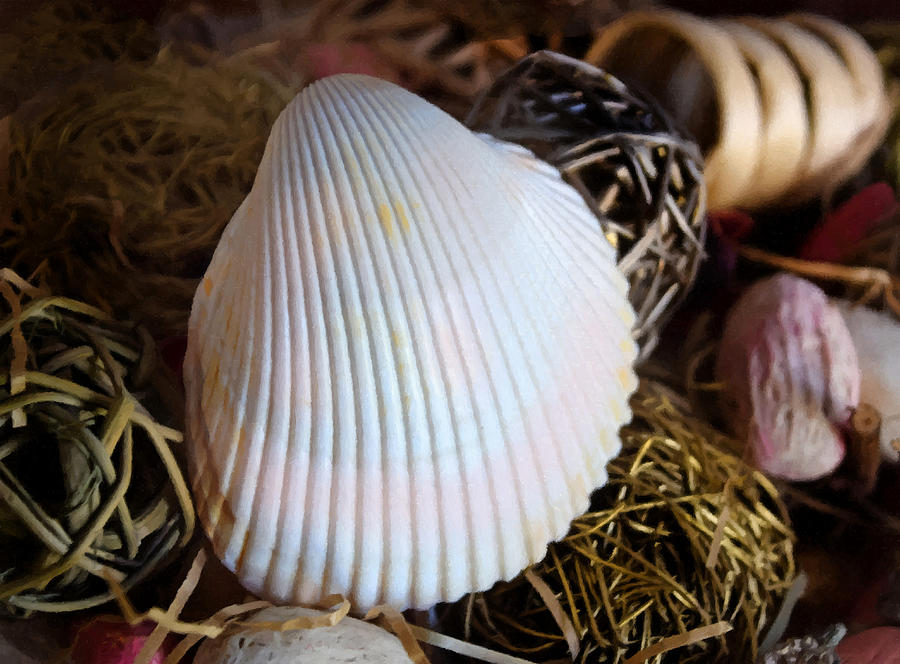 Cut Ribbed Ark Shell Still Life by Sandi OReilly