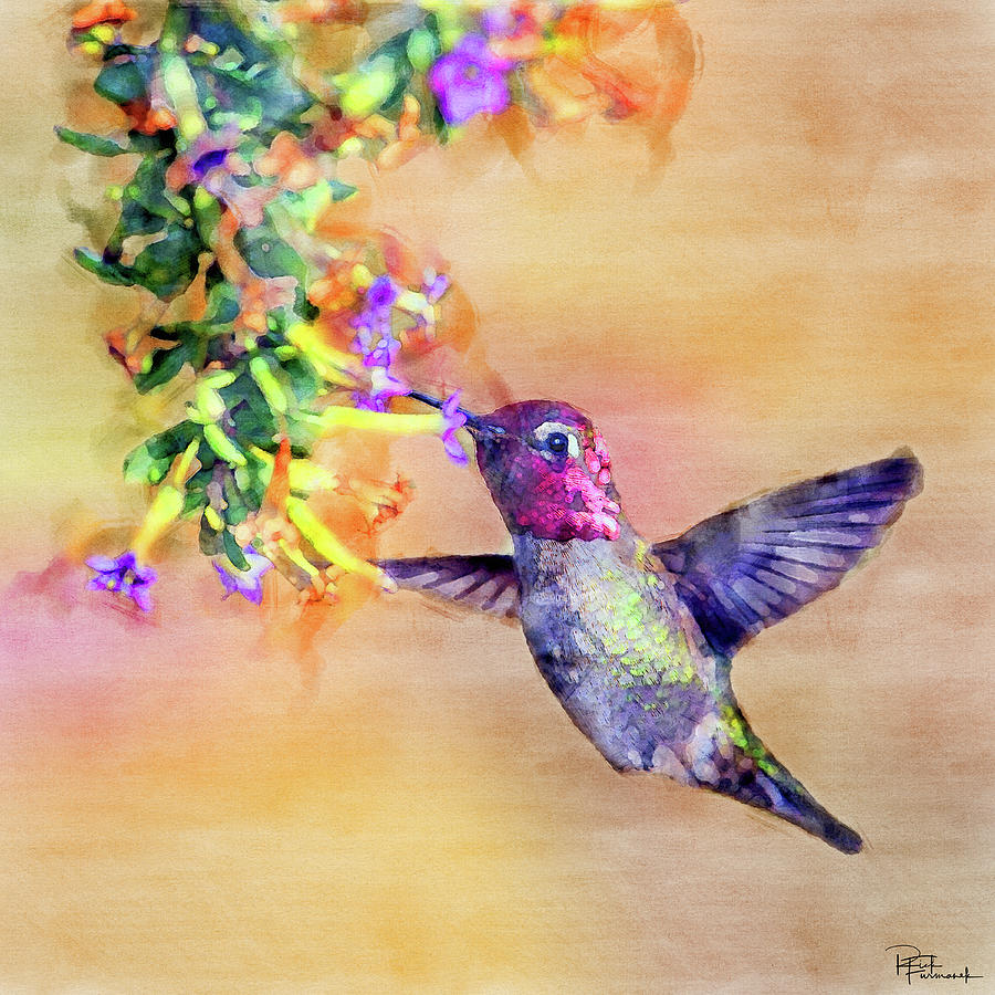 Cute as a Button in Digital Watercolor by Rick Furmanek