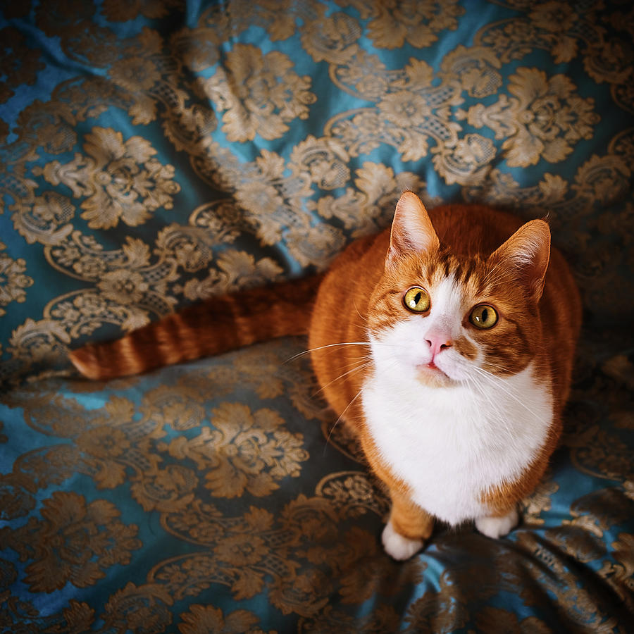 Cute Cat Named Nisse Photograph by Knape
