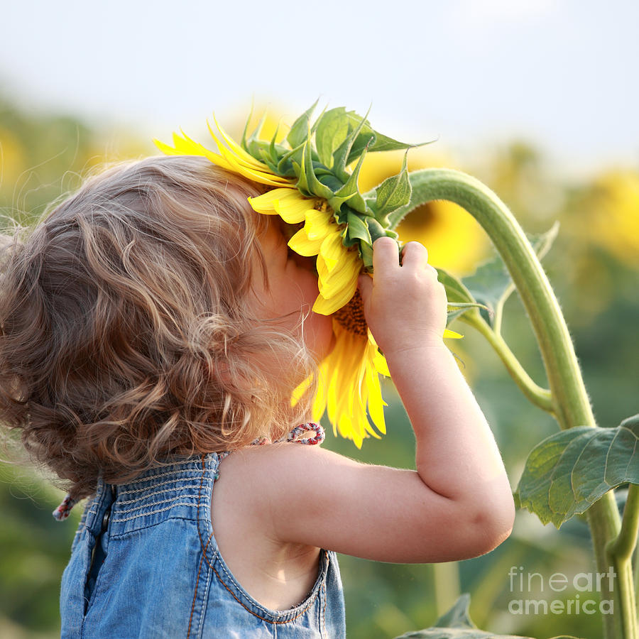 Innocence Photograph - Cute Child With Sunflower In Summer by Sunny Studio