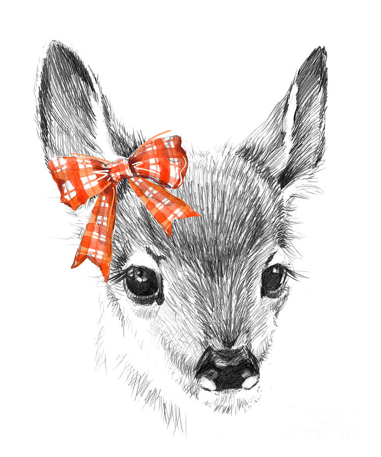 Deer Digital Art - Cute Deer. Pencil Sketch Of Fawn by Faenkova Elena