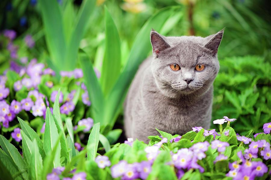 Cute Kitten Oudoors Photograph by Artmarie