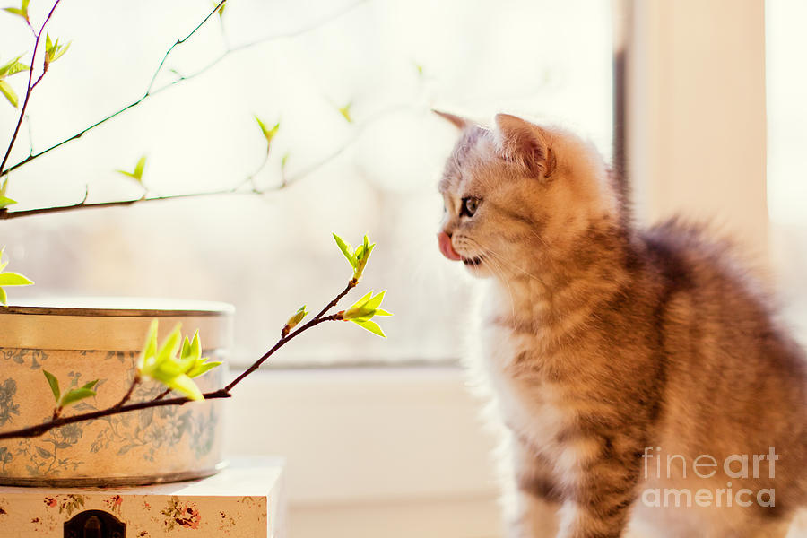 Pets Photograph - Cute Little Kitty Playing With Green by Aprilante