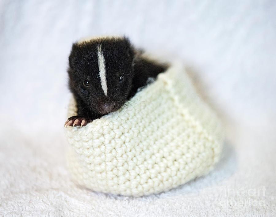 Cute little Stinker... by Nina Stavlund