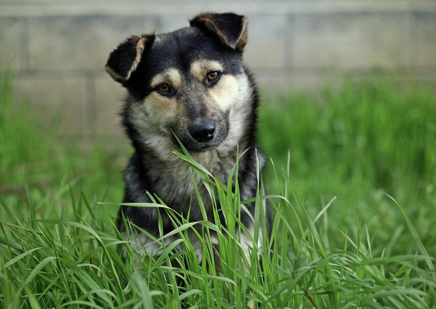 Cute Puppy Sitting In Grass Photograph by By Julie Mcinnes
