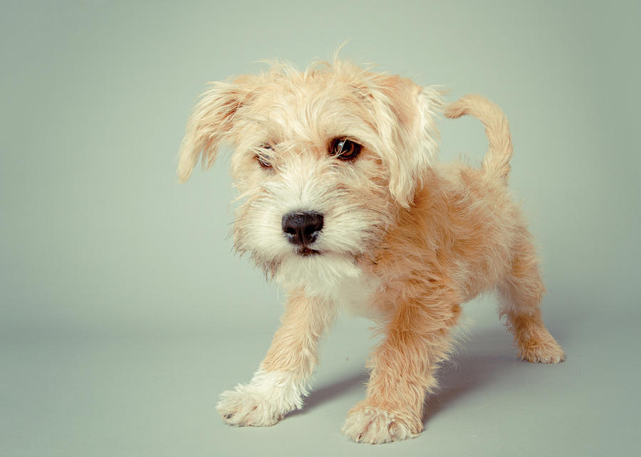 Cute Puppy Photograph by Square Dog Photography