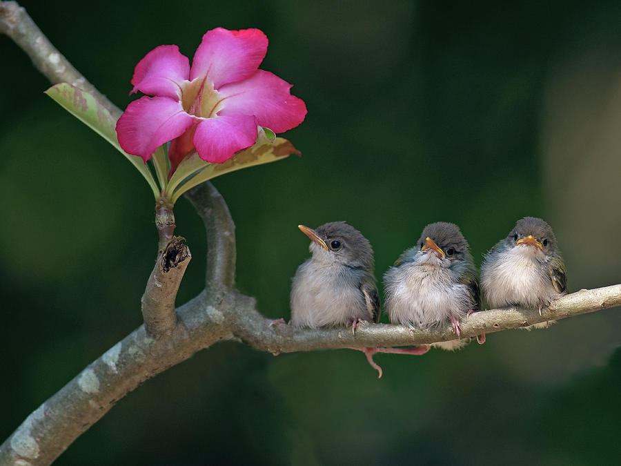 Three Animals Photograph - Cute Small Birds by Photowork By Sijanto