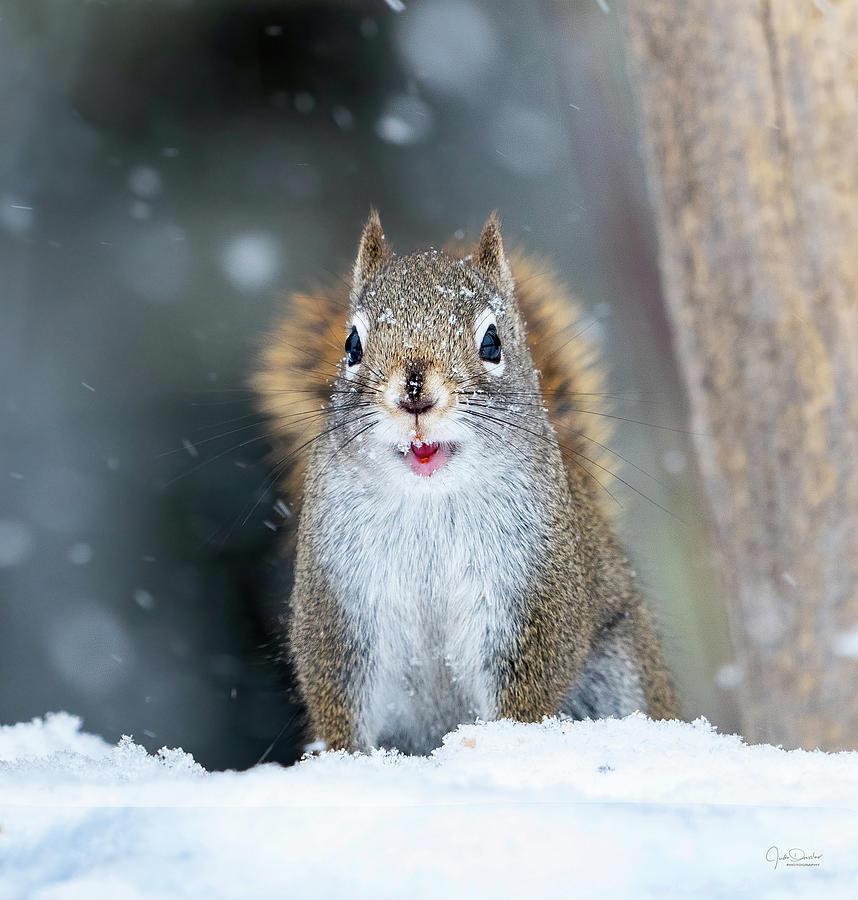 Cute Squirrel Photograph By Judi Dressler