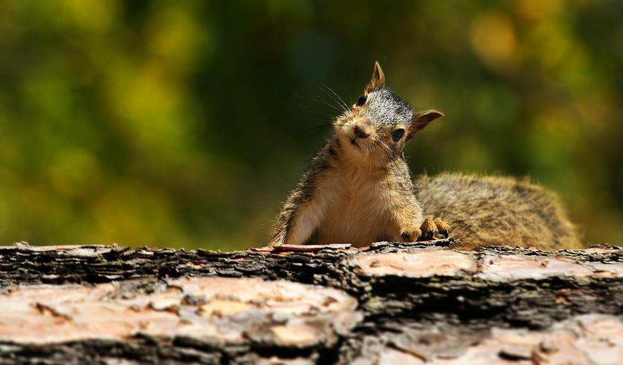 Cute Squirrel Photograph by Kativ