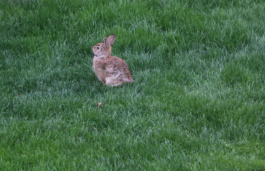 Cute Wild Bunny by The Art Of Marilyn Ridoutt-Greene