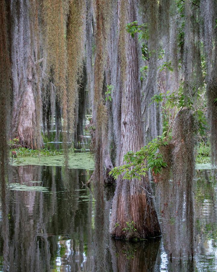 Cypress Bog by Dorothy Cunningham