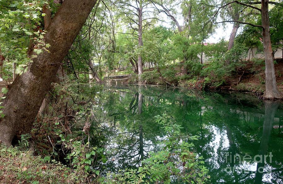 Cypress Creek Mid Afternoon Mid October 2 of 3 by Felipe Adan Lerma