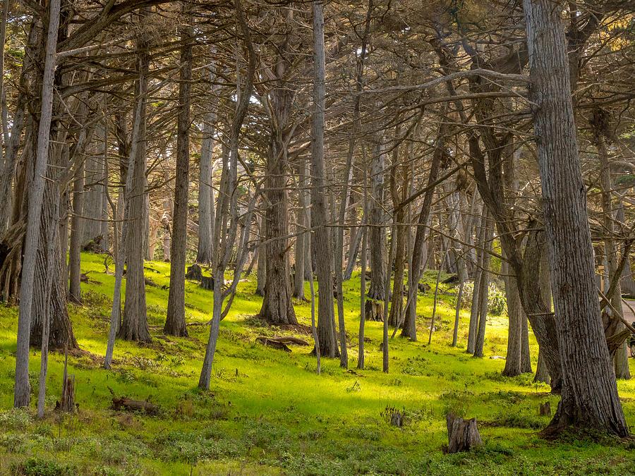 Cypress Grove by Derek Dean