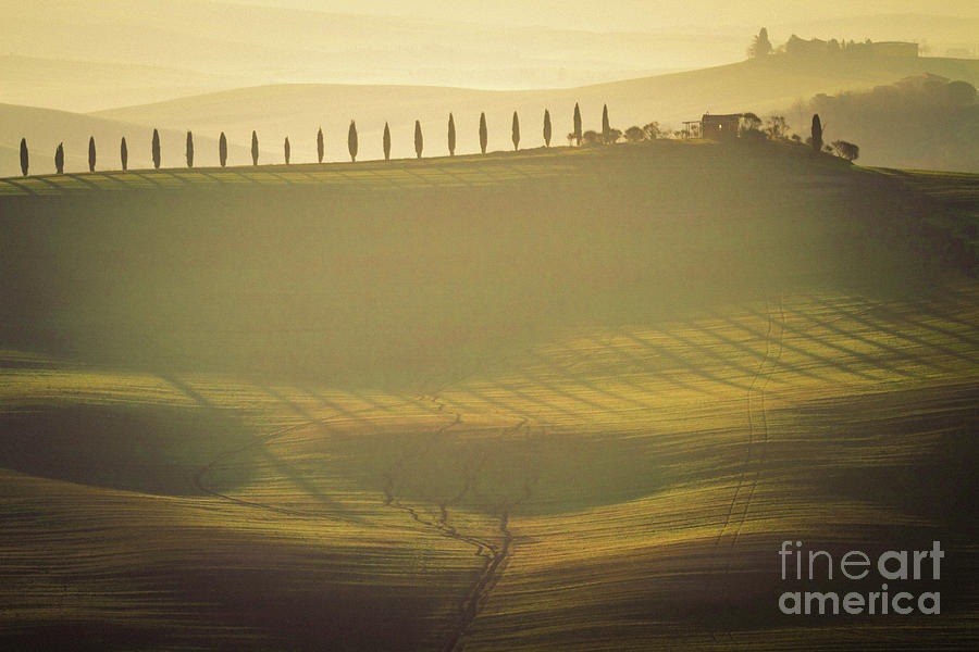 Cypress Line in Tuscan Scenery by Heiko Koehrer-Wagner