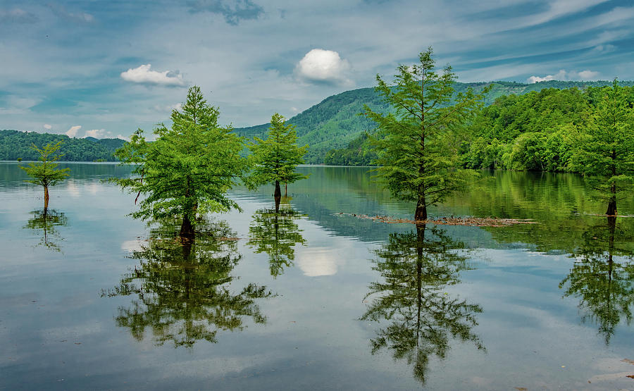 Cypress Reflections on a Summer Afternoon by Marcy Wielfaert