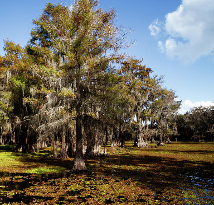 Cypress Row by Lana Trussell