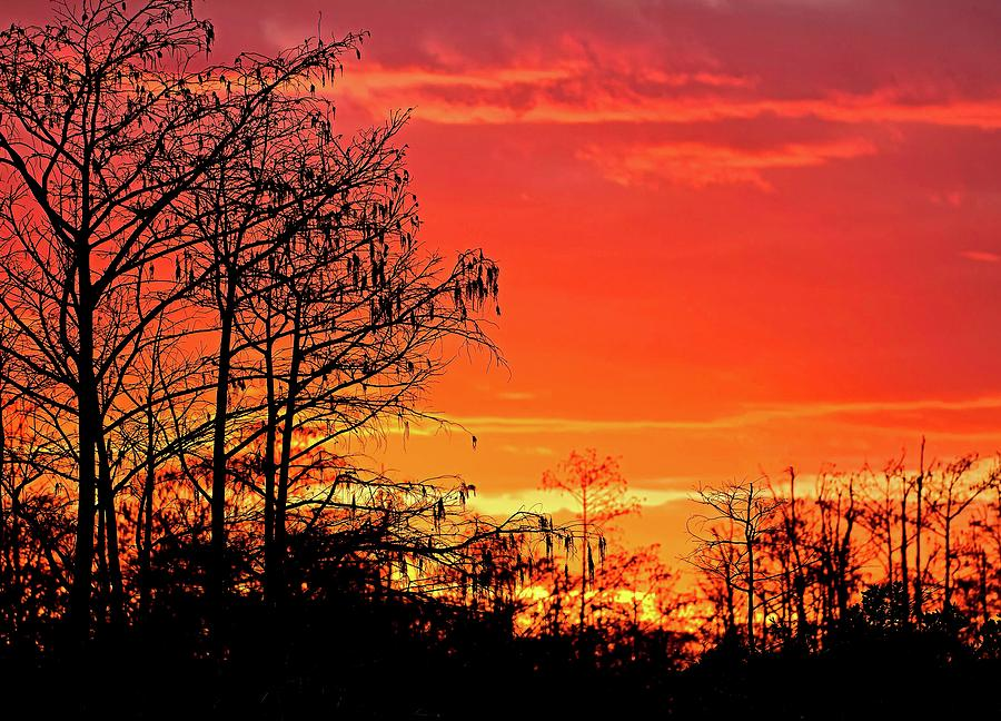 Cypress Swamp Sunset 2 by Steve DaPonte
