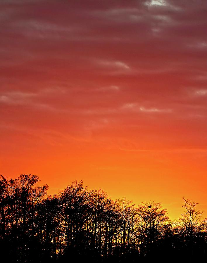 Cypress Swamp Sunset 4 by Steve DaPonte