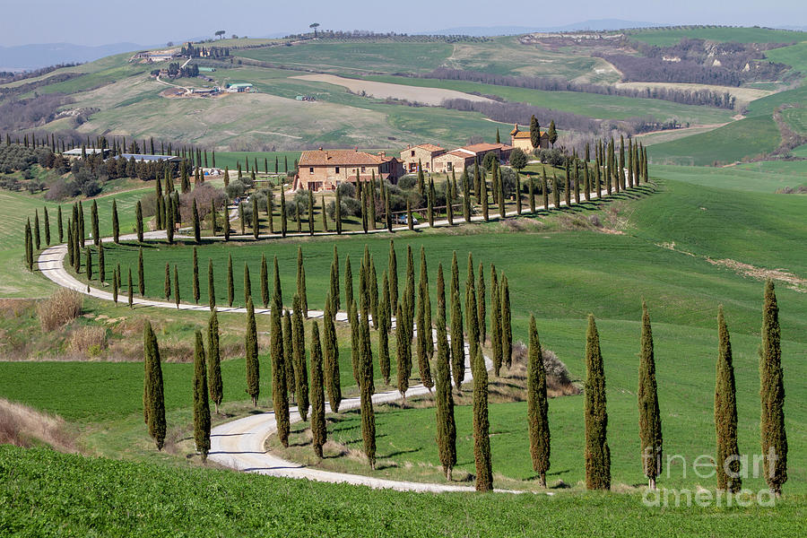 Cypress Tree Alley In Tuscany-4 Photograph