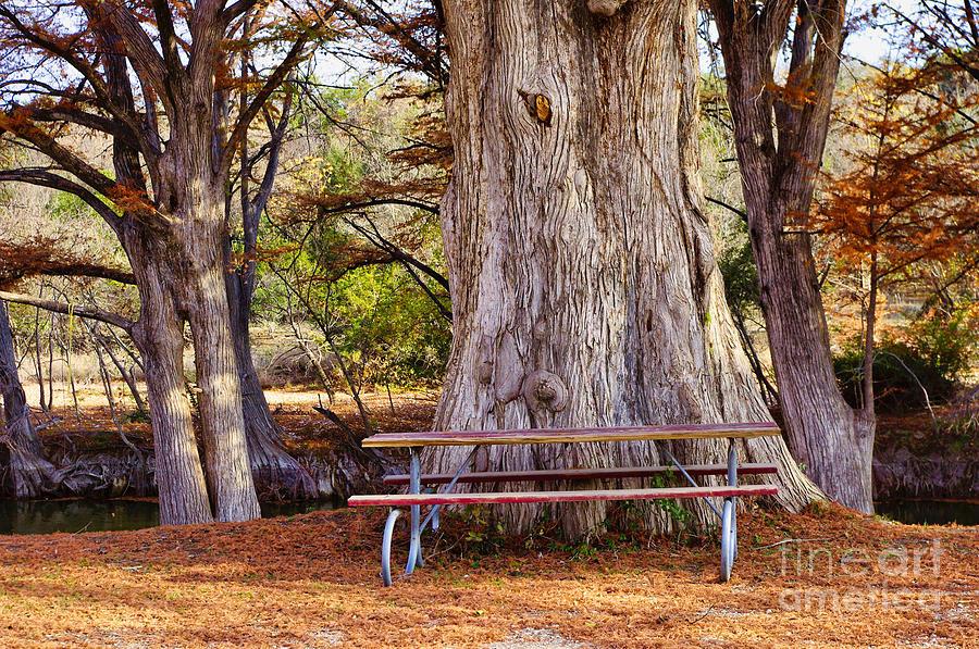 Cypress Tree Autumn by Gary Richards